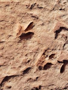 Moenave Dinosaur Tracks