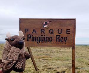 At the king penguin colony