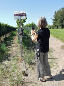 Zolo / Tapiz vineyards, Mendoza