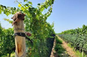 Zolo / Tapiz vineyards, Mendoza.