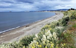 Punta Arenas coastline