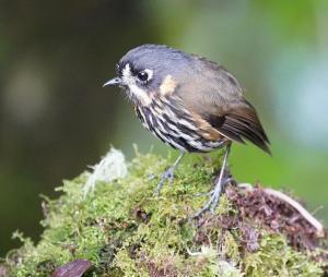 Colombia 2021-Birds