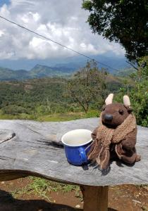 Coffee with a view...