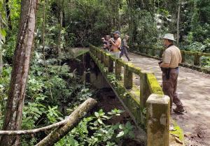 Birding the Cauca lowlands