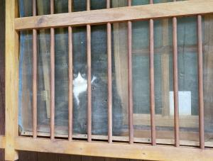Cat not amongst the pigeons