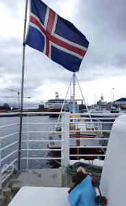 Going on a puffin cruise! Reykjavik, Iceland