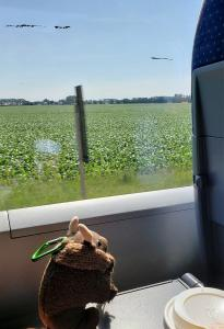 Train ride to Halle (Saale)