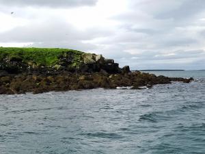 Lundey island seabird colonies