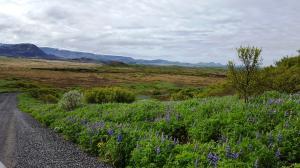 Heiðmörk Nature Reserve