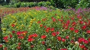 At the Dallas Arboretum