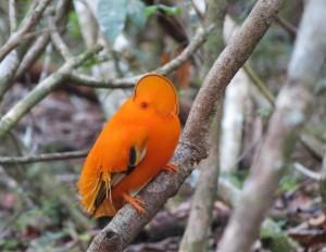 Birds of Brazil 2016