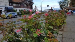 Puerto Varas, city of roses