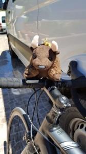 Inspecting Liza's bike