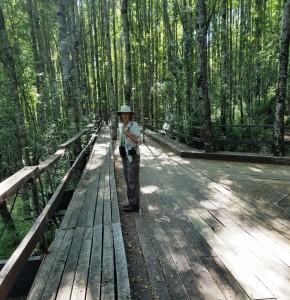 Elevated boardwalk thru the trees