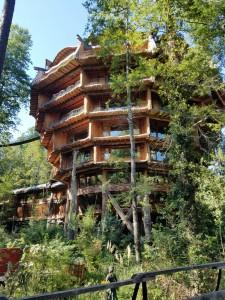 The wild Hotel Nothofagus nearby