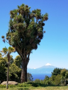 Another Osorno view