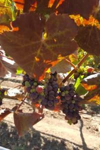 Kingston Family Vineyards