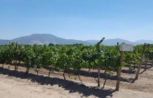 Bodegas Re Vineyards