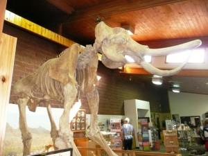 Mammoth kill site