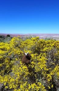 Petrified Forest National Park, AZ