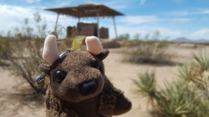 Southwest Travels 2016 - Buddy Bison