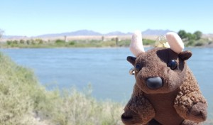 Me on the mighty Colorado River! CA