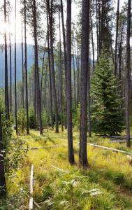 Forest trail, Glacier NP