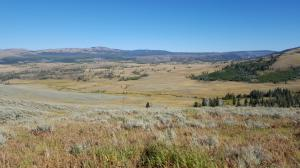 Grassland, Yellowstone NP