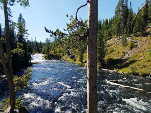 Near Lewis Falls, Yellowstone NP
