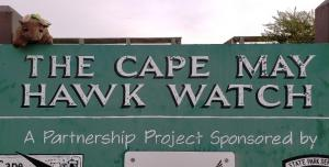 At the Cape May Hawk Watch!