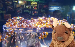 At the Two Oceans Aquarium
