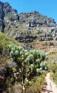 Camps Bay Pipe Track hike