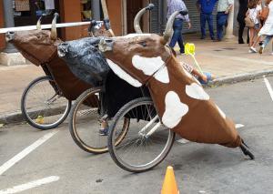 Parade bulls, Sahagún