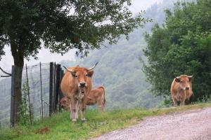 Cows were not pleased to see us