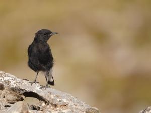 Spain 2021-Birds