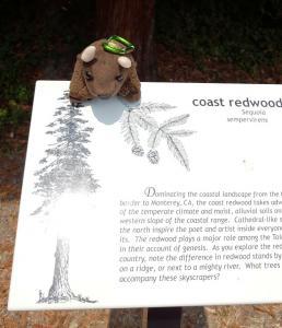 Redwoods NP, CA